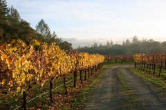 calistoga-vineyard-vacation-rental-15