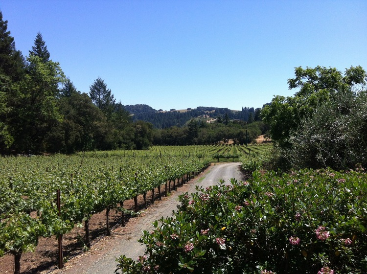 napa wine country vineyards