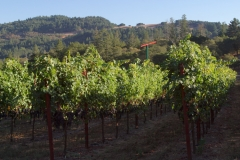 napa valley vineyard lodging